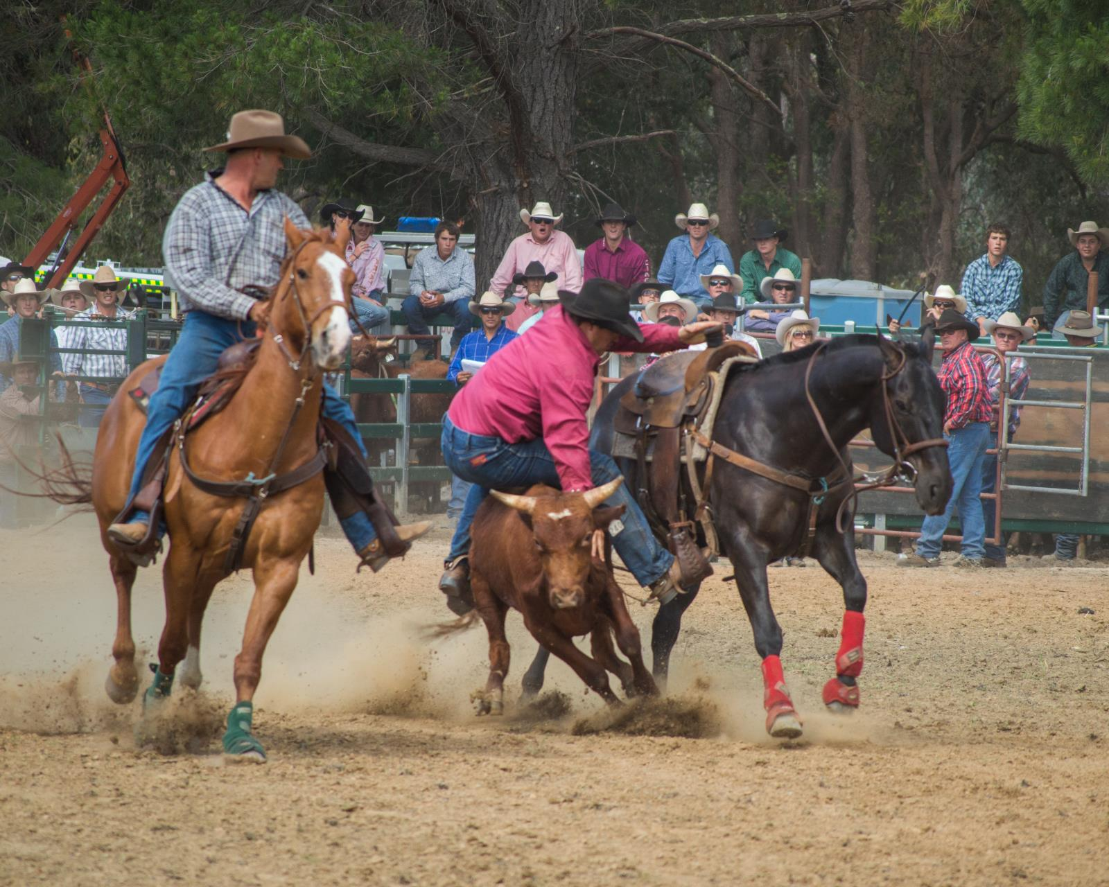 Rodeo Image 2